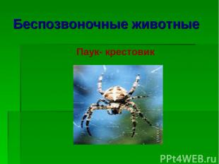 Беспозвоночные животные Паук- крестовик