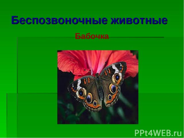 Беспозвоночные животные Бабочка