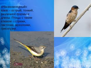 «Насекомоядный» клюв – острый, тонкий, различной формы и длины. Птицы с таким кл