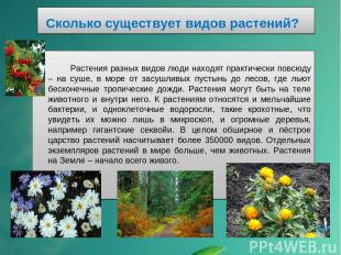 Сколько существует видов растений? Растения разных видов люди находят практическ