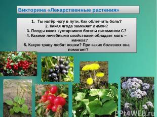 Викторина «Лекарственные растения» Ты натёр ногу в пути. Как облегчить боль? 2.