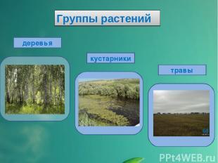 Группы растений деревья кустарники травы