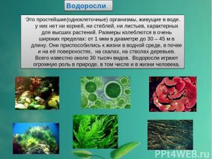 Водоросли 'Это простейшие(одноклеточные) организмы, живущие в воде. у них нет ни