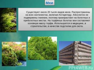 Мхи Существуют около 20 тысяч видов мхов. Распространены на всех континентах, вк