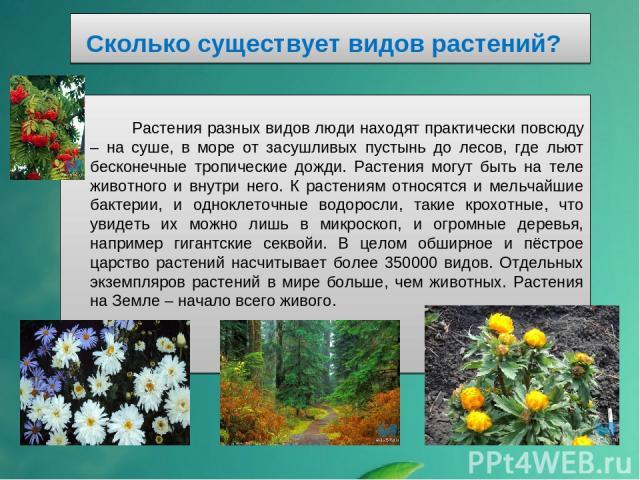 Сколько существует видов растений? Растения разных видов люди находят практически повсюду – на суше, в море от засушливых пустынь до лесов, где льют бесконечные тропические дожди. Растения могут быть на теле животного и внутри него. К растениям отно…
