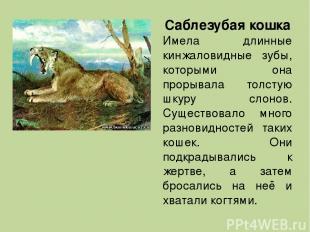 Саблезубая кошка Имела длинные кинжаловидные зубы, которыми она прорывала толсту