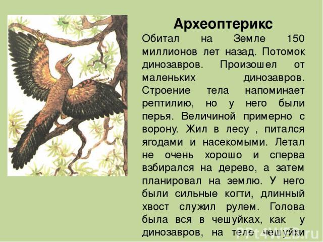Археоптерикс Обитал на Земле 150 миллионов лет назад. Потомок динозавров. Произошел от маленьких динозавров. Строение тела напоминает рептилию, но у него были перья. Величиной примерно с ворону. Жил в лесу , питался ягодами и насекомыми. Летал не оч…