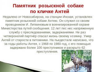 Недалеко от Новосибирска, на станции Инская, установлен памятник розыскной собак