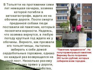 В Тольятти на протяжении семи лет немецкая овчарка, хозяева которой погибли в ав