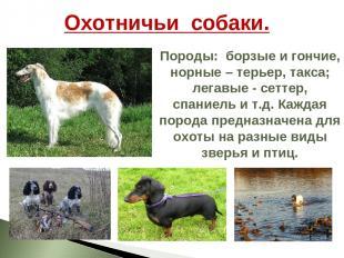 Охотничьи собаки. Породы: борзые и гончие, норные – терьер, такса; легавые - сет