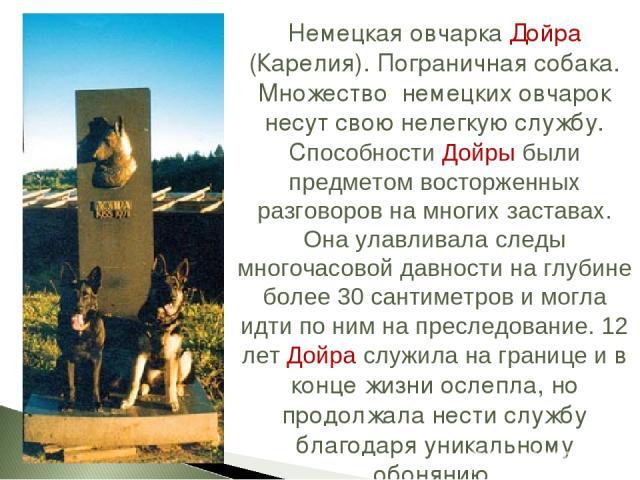 Немецкая овчарка Дойра (Карелия). Пограничная собака. Множество немецких овчарок несут свою нелегкую службу. Способности Дойры были предметом восторженных разговоров на многих заставах. Она улавливала следы многочасовой давности на глубине более 30 …