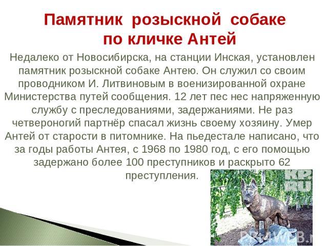Недалеко от Новосибирска, на станции Инская, установлен памятник розыскной собаке Антею. Он служил со своим проводником И. Литвиновым в военизированной охране Министерства путей сообщения. 12 лет пес нес напряженную службу с преследованиями, задержа…