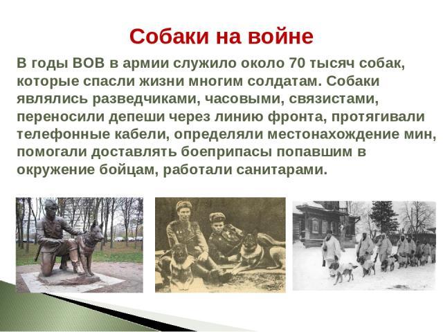 Собаки на войне В годы ВОВ в армии служило около 70 тысяч собак, которые спасли жизни многим солдатам. Собаки являлись разведчиками, часовыми, связистами, переносили депеши через линию фронта, протягивали телефонные кабели, определяли местонахождени…
