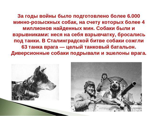 За годы войны было подготовлено более 6.000 минно-розыскных собак, на счету которых более 4 миллионов найденных мин. Собаки были и взрывниками: неся на себя взрывчатку, бросались под танки. В Сталинградской битве собаки сожгли 63 танка врага — целый…