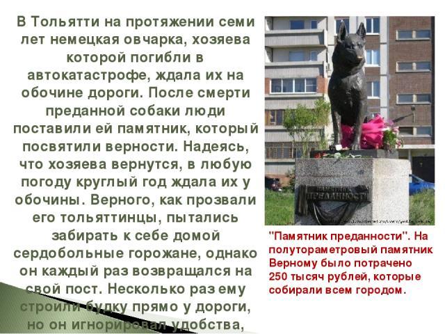 В Тольятти на протяжении семи лет немецкая овчарка, хозяева которой погибли в автокатастрофе, ждала их на обочине дороги. После смерти преданной собаки люди поставили ей памятник, который посвятили верности. Надеясь, что хозяева вернутся, в любую по…