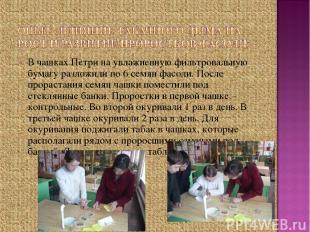 В чашках Петри на увлажненную фильтровальную бумагу разложили по 6 семян фасоли.