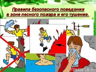 Правила безопасного поведения в зоне лесного пожара и его тушение.
