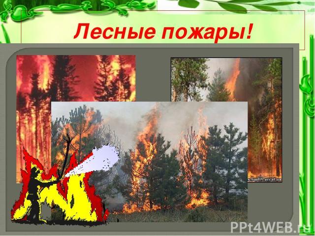 Лесные пожары!