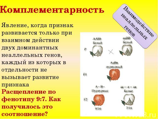 Комплементарность Взаимодействие неаллельных генов Явление, когда признак развивается только при взаимном действии двух доминантных неаллельных генов, каждый из которых в отдельности не вызывает развитие признака Расщепление по фенотипу 9:7. Как пол…