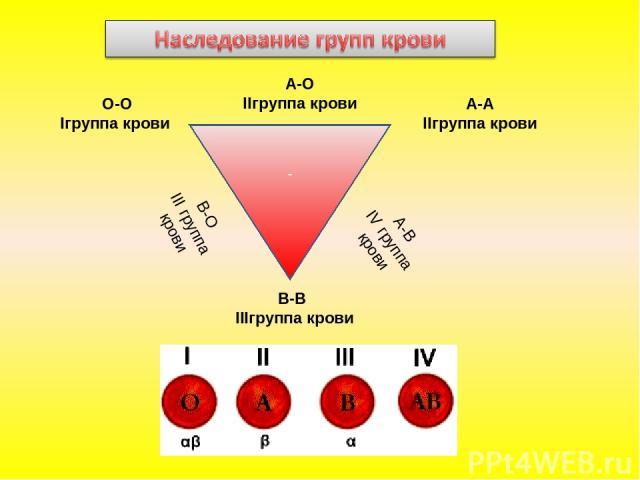 - О-О Iгруппа крови А-А IIгруппа крови В-В IIIгруппа крови В-О III группа крови А-B IV группа крови А-O IIгруппа крови