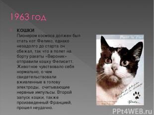 КОШКИ Пионером космоса должен был стать кот Феликс, однако незадолго до старта о