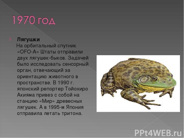 Лягушки На орбитальный спутник «OFO-A» Штаты отправили двух лягушек-быков. Задачей было исследовать сенсорный орган, отвечающий за ориентацию животного в пространстве. В 1990 г. японский репортер Тойохиро Акияма привез с собой на станцию «Мир» древе…