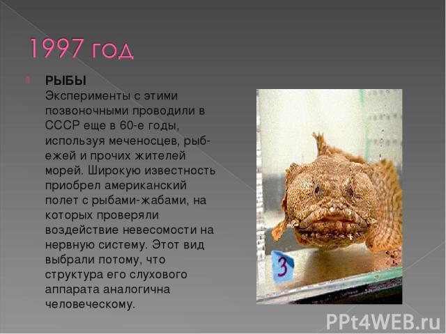 РЫБЫ Эксперименты с этими позвоночными проводили в СССР еще в 60-е годы, используя меченосцев, рыб-ежей и прочих жителей морей. Широкую известность приобрел американский полет с рыбами-жабами, на которых проверяли воздействие невесомости на нервную…