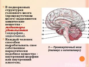 В подкорковых структурах головного мозга (промежуточном мозге) выделяются химиче