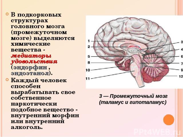 В подкорковых структурах головного мозга (промежуточном мозге) выделяются химические вещества - медиаторы удовольствия (эндорфин , эндоэтанол). Каждый человек способен вырабатывать свое собственное наркотически подобное вещество - внутренний морфин …