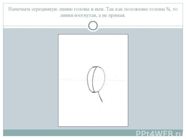Намечаем серединную линию головы и шеи. Так как положение головы ¾, то линия изогнутая, а не прямая.