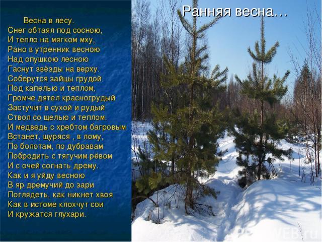 Ранняя весна… Весна в лесу. Снег обтаял под сосною, И тепло на мягком мху, Рано в утренник весною Над опушкою лесною Гаснут звёзды на верху. Соберутся зайцы грудой Под капелью и теплом, Громче дятел красногрудый Застучит в сухой и рудый Ствол со щел…