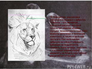 III.Знакомcтво рисованием животного я начинал с наброска. Набросок – это линейны