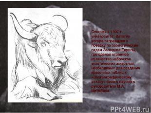 Окончив в 1907 г. университет, Ватагин вскоре отправился в поездку по зоологичес