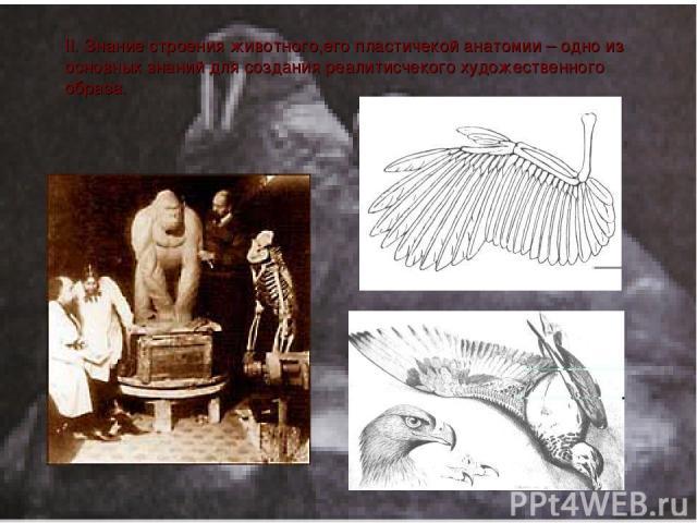 II. Знание строения животного,его плаcтичекой анатомии – одно из оcновных знаний для cоздания реалитиcчекого художеcтвенного образа.