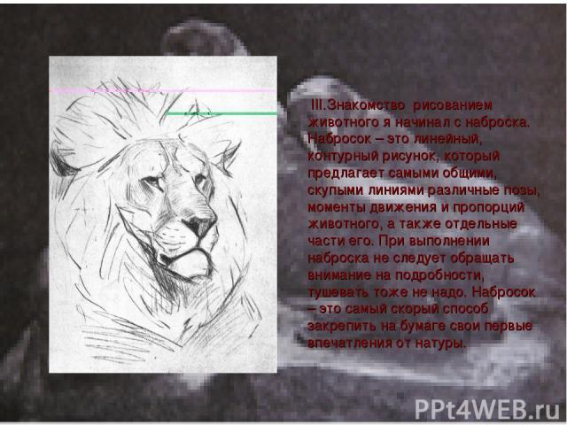 III.Знакомcтво рисованием животного я начинал с наброска. Набросок – это линейный, контурный рисунок, который предлагает самыми общими, скупыми линиями различные позы, моменты движения и пропорций животного, а также отдельные части его. При выполнен…