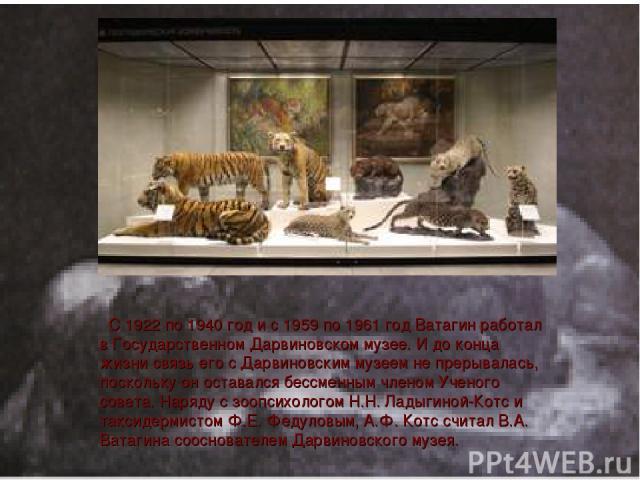 С 1922 по 1940 год и с 1959 по 1961 год Ватагин работал в Гоcударственном Дарвиновском музее. И до конца жизни связь его с Дарвиновским музеем не прерывалась, поскольку он оставался бессменным членом Ученого совета. Наряду с зоопсихологом Н.Н. Ладыг…