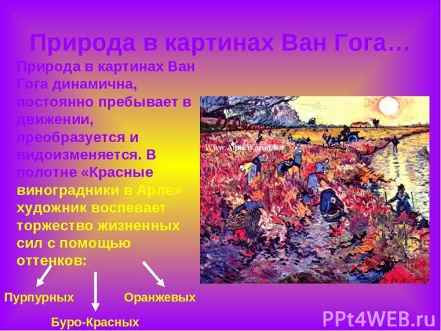 Природа в картинах Ван Гога… Природа в картинах Ван Гога динамична, постоянно пребывает в движении, преобразуется и видоизменяется. В полотне «Красные виноградники в Арле» художник воспевает торжество жизненных сил с помощью оттенков: Пурпурных Буро…