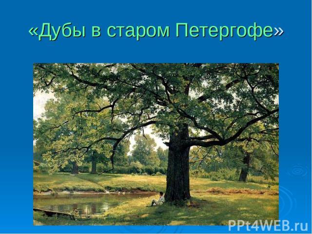 «Дубы в старом Петергофе»
