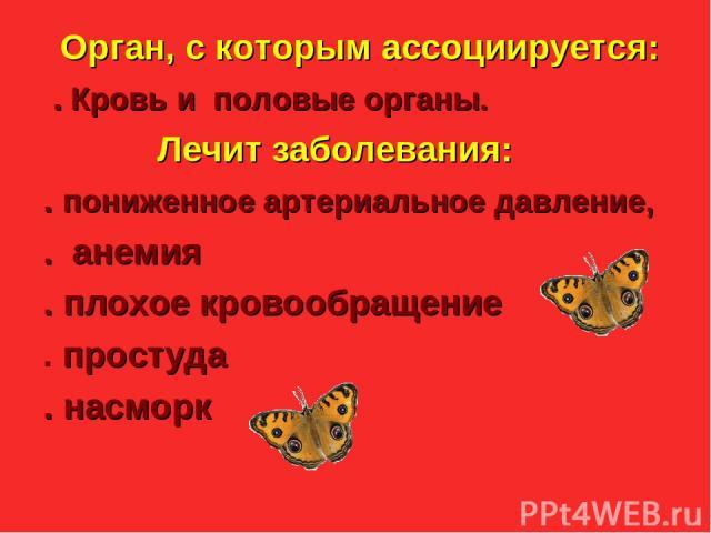 Julia Tishinskaja Орган, с которым ассоциируется: . Кровь и половые органы. Лечит заболевания: . пониженное артериальное давление, . анемия . плохое кровообращение . простуда . насморк
