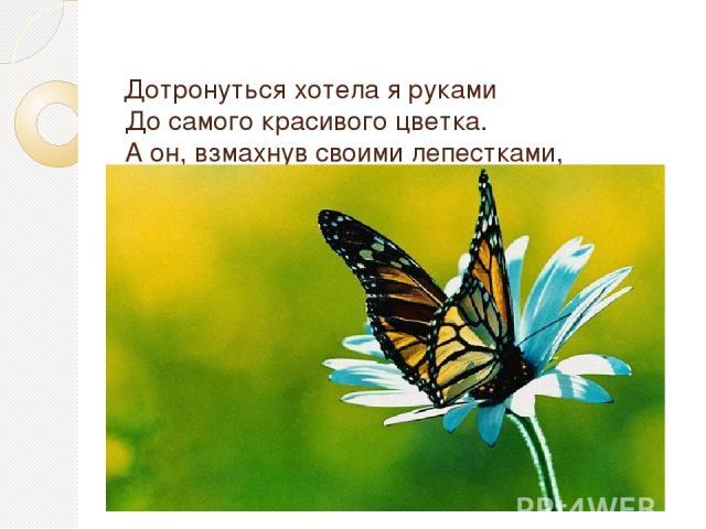 Дотронуться хотела я руками До самого красивого цветка. А он, взмахнув своими лепестками, Вспорхнул и улетел под облака! Т. Нестерова