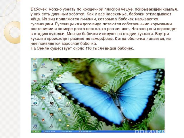 Бабочек можно узнать по крошечной плоской чешуе, покрывающей крылья, у них есть длинный хоботок. Как и все насекомые, бабочки откладывают яйца. Из яиц появляются личинки, которые у бабочек называются гусеницами. Гусеницы каждого вида питаются собств…