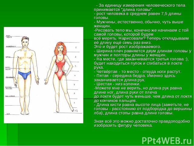 - За единицу измерения человеческого тела принимается