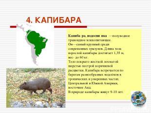4. КАПИБАРА Капиба ра, водосви нка —полуводное травоядное млекопитающее. Он—самы