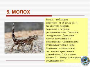 5. МОЛОХ Молох – небольшое животное, от 18 до 22 см, и все его тело покрыто боль