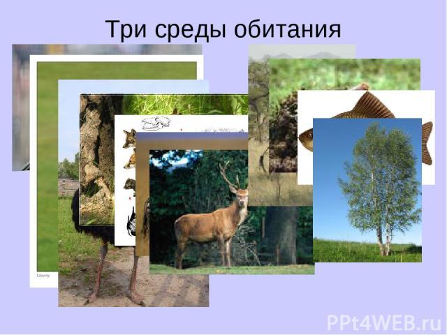 Три среды обитания