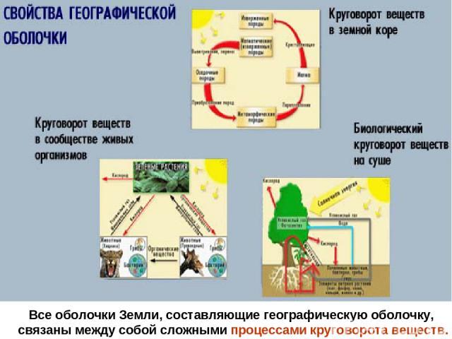 Все оболочки Земли, составляющие географическую оболочку, связаны между собой сложными процессами круговорота веществ.
