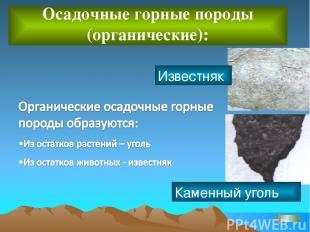 Осадочные горные породы (органические): Известняк Каменный уголь