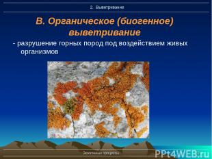 Экзогенные процессы * В. Органическое (биогенное) выветривание - разрушение горн