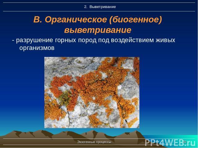 Экзогенные процессы * В. Органическое (биогенное) выветривание - разрушение горных пород под воздействием живых организмов Экзогенные процессы