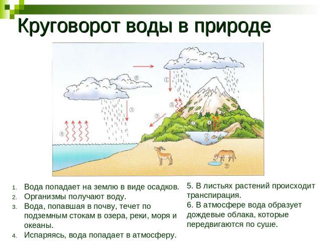 Круговорот воды в природе Вода попадает на землю в виде осадков. Организмы получают воду. Вода, попавшая в почву, течет по подземным стокам в озера, реки, моря и океаны. Испаряясь, вода попадает в атмосферу. 5. В листьях растений происходит транспир…